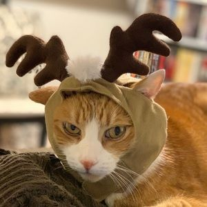 Petco Cat Reindeer Holiday Christmas Antler Hat